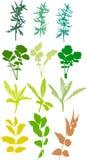 Coloque las plantas, hierbas, hojas - vector, rastreado Fotografía de archivo