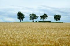 Coloque a madeira do outono do verão da paisagem do céu da floresta da árvore fotos de stock