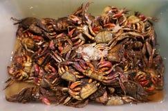 Coloque o caranguejo com alimento da rua do gelo em Tailândia Imagens de Stock