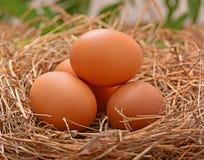 Coloque os ovos em assoalhos de uma madeira da pilha do feno Fotos de Stock Royalty Free