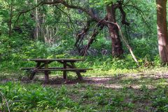 Coloque para descansar e comer na floresta da propriedade Marienwaerdt fotografia de stock