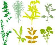 Coloque plantas, ervas, folhas - vetor, seguido Imagens de Stock