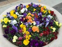 Coloré, animé, fleur Boquet de ressort Images libres de droits