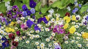 Coloré brillamment et l'été ou le ressort de floraison vif fleurit sur la pelouse ou le pré, style rustique Beau saisonnier image libre de droits