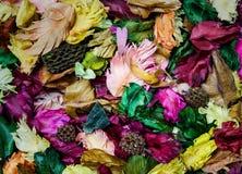 Coloré des feuilles aromatiques Photo libre de droits