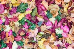 Coloré des feuilles aromatiques Images stock