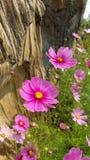 Coloré des fleurs Photographie stock