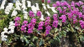 Coloré des fleurs Image stock