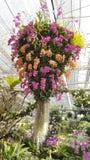 Coloré des fleurs Photo stock