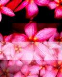 Coloré des fleurs sur la terre Image libre de droits