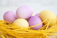 Coloré des oeufs de pâques dans le nid sur le fond de couleur en pastel et de blanc Photographie stock