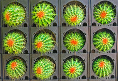 Coloré du cactus Image libre de droits