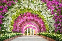 Coloré du tennel d'orchidée photographie stock libre de droits