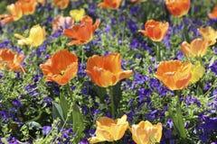 Coloré et vernal Images stock