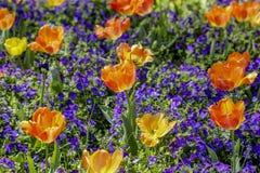 Coloré et vernal Photo stock