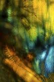 Coloré, polarisant, le micrographe abstrait de gaffent des tissus d'abeille image libre de droits