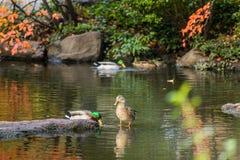Coloré quand chute venant, automne dans le Central Park avec le commutateur noir photographie stock libre de droits