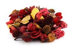 Coloré séchez les lames et les fleurs Photo libre de droits