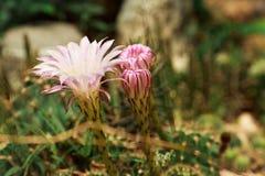 Coloré, simple, tir, nature, juteuse, jardin, Herbace photos stock