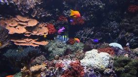 Coloré voir les poissons dans la fin d'aquarium  clips vidéos