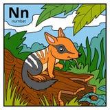 Color alphabet for children, letter N numbat. Color vector alphabet for children, letter N numbat Stock Photography