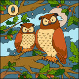 Color alphabet: letter O (owl) Royalty Free Stock Photography
