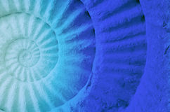 Color of ammonite prehistoric fossil. Stock Photography