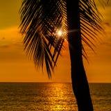 Color anaranjado de la puesta del sol colorida del cielo con la palmera del coco en fondo foto de archivo