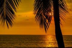 Color anaranjado de la puesta del sol colorida del cielo con la palmera del coco en fondo Haces de brillo de la luz a través de l imagen de archivo