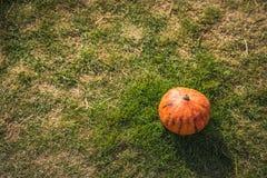 Color anaranjado de las calabazas con la luz del día Fotos de archivo libres de regalías