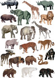 Color Animals Large Collection Stock Images
