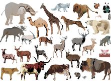 Color animals set. Illustration with animals collection isolated on white background Royalty Free Stock Photography