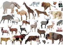 Color animals set stock illustration