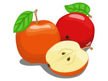 Color apple fruit vector illustration Stock Images