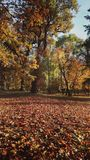 Color of automn. Park in an automn sunny day Stock Images