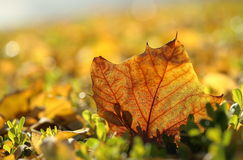 The color of autum Royalty Free Stock Photo