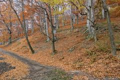 Color autumn in forest Stock Photography