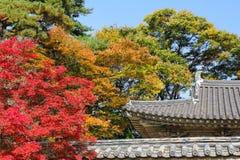Color of autumn in Korea Royalty Free Stock Photos