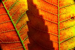Color autumn leaf green red orange yellow macro royalty free stock photography