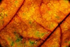 Color autumn leaf green red orange yellow macro stock photos
