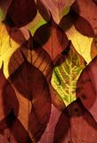 Color autumn leaves Royalty Free Stock Photography