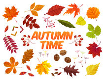 Free Color Autumn Leaves On White Background. Fall Leaf Set. Vector Illustration EPS10 Royalty Free Stock Photos - 76862768