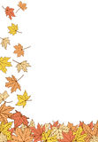 Color autumn leaves template Royalty Free Stock Images