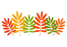 Color autumn leaves Royalty Free Stock Photo