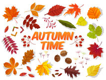 Color autumn leaves on white background. Fall leaf set. Vector illustration EPS10 Stock Photos