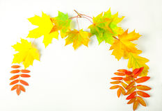 Color autumn leaves on a white background Royalty Free Stock Photography