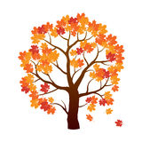 Color Autumn Marple Tree. Vector Illustration. Royalty Free Stock Photos