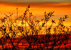 Color autumnal photography of naked trees branches in sunset Stock Photo