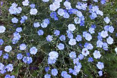 Color azul Fotos de archivo
