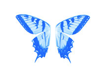 Color azul de la mariposa de las alas en el aislante blanco Ilustración del Vector